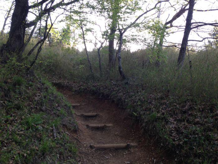 伊吹山樹林帯